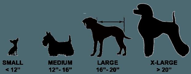 Kích thước chó