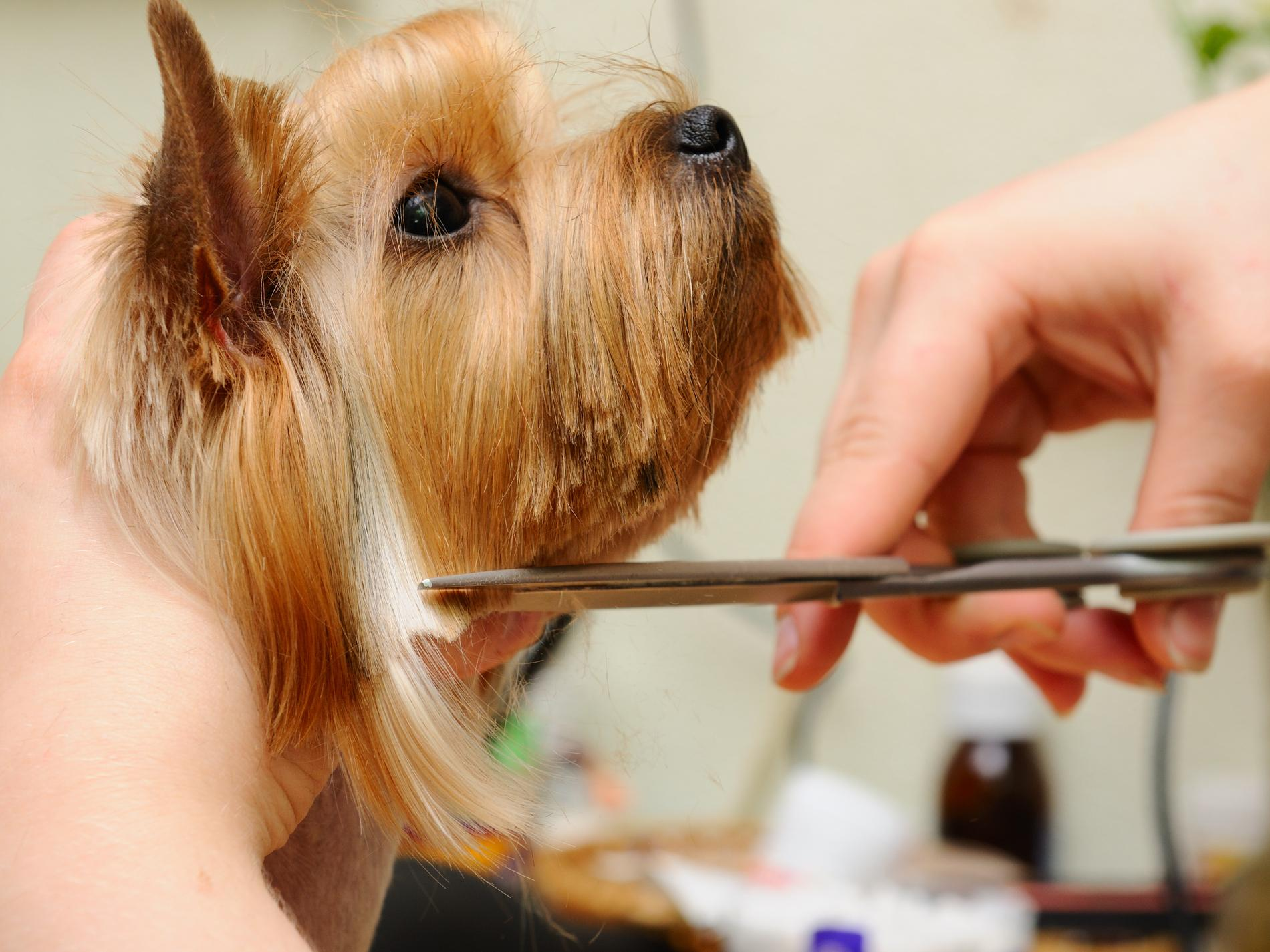 pet groom 5 reviews of pet-a-groom wonderful place i always felt comfortable leaving my dog in their hands i can tell they really love animals my yorkie always came home.