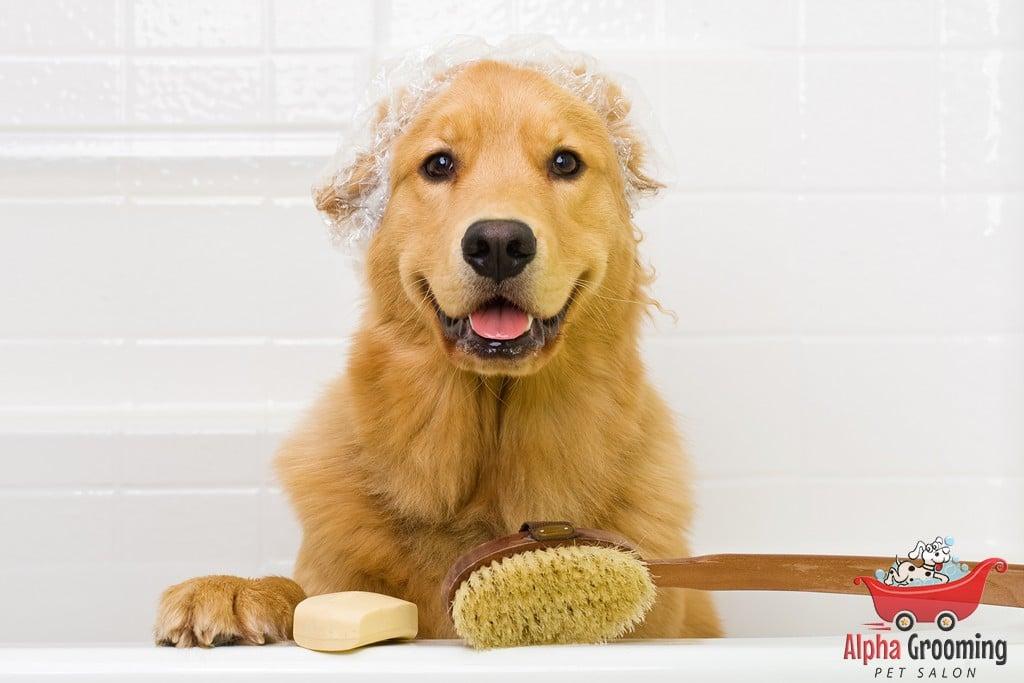 행복한 강아지, 행복한 애완 동물 소유자. 방법은 여기 있습니다!